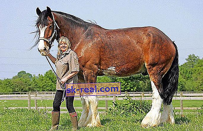 pierderea în greutate ponei