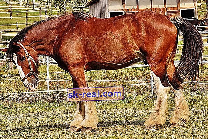 ponei de grăsime pierde în greutate