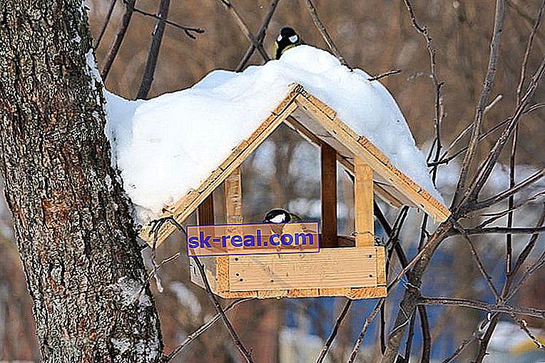 Як прикрасити годівницю для птахів?