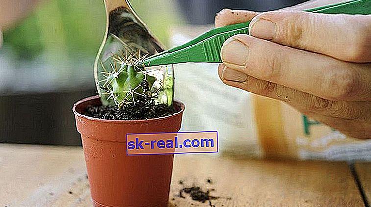 Який грунт потрібен для вирощування кактусів?