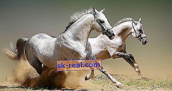 Ile lat mają konie?
